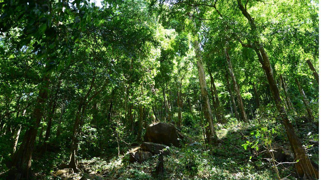 Necesitan 100 mil dólares para preservar bosque y nacimientos de agua en Jujutla