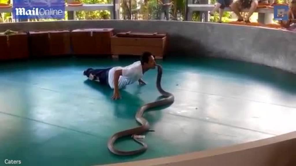 Una cobra escapa de su domador en un espectáculo con turistas