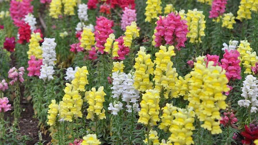 Guatemala espera batir récord en exportación de flores