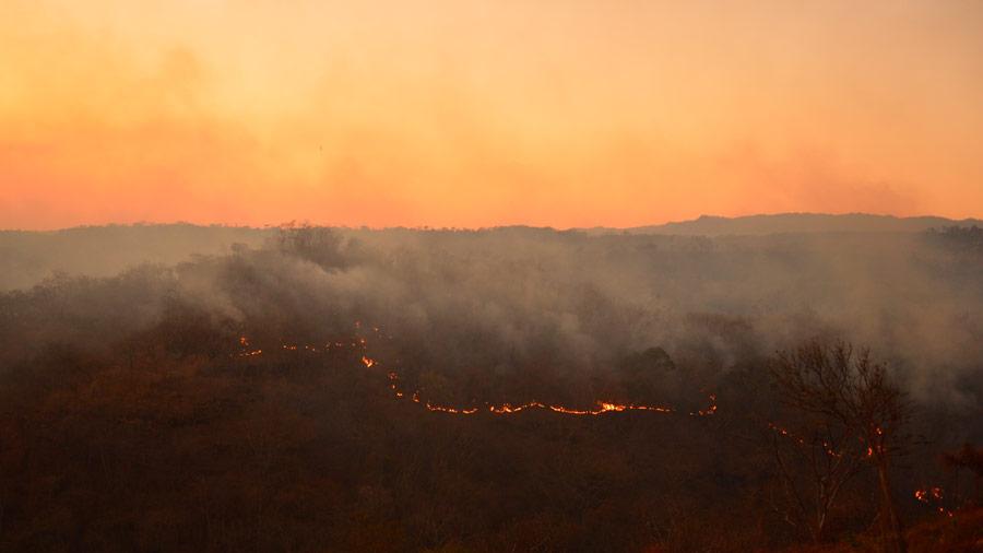 Incendios dañan 7,092 manzanas de bosques en el país