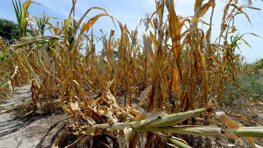 El Salvador sin un plan nacional para el corredor seco
